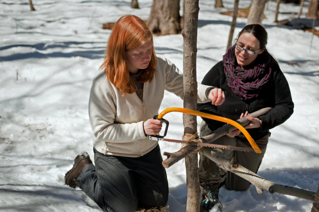 Two women kneeling in the snow, sawing a tree branch