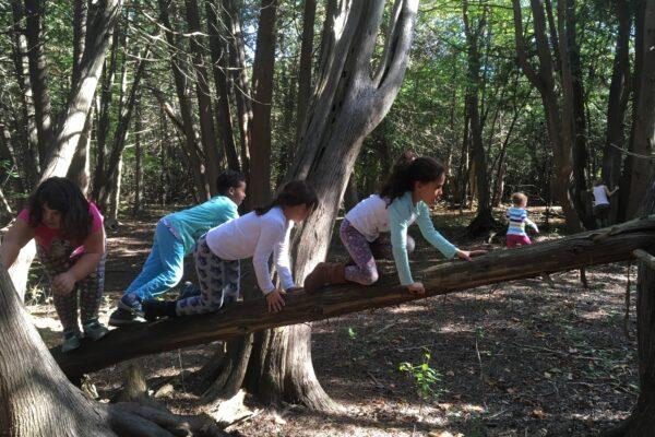 A group of children crawl across a fallen tree