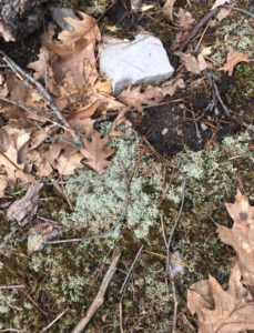 A closeup of the ground covered in moss, dead leaves and rocks