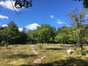 A winding, grassy path leading to a forest. The sky is blue and sunny.