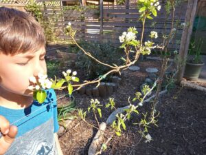 A boy sniffing flowers with his eyes closed