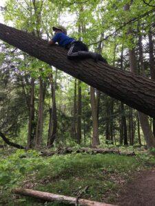 A boy climbing a tree that has fallen over